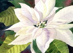 I do a few poinsettia paintings every year around this time. It gives me that good old Christmassy feeling. This one is 5 x 7 a...