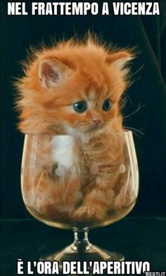 cute and attractive pets: Cute and attractive Kitty - Cute & Funny Animal Pictures - Katzen / Cat Baby Animals Super Cute, Cute Baby Cats, Cute Little Animals, Cute Cats And Kittens, Cute Funny Animals, Funny Cats, Kittens Cutest Baby, Orange Kittens, Adorable Kittens