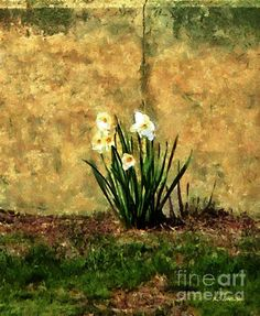"""""""A Spot of Spring"""" ~ © 2014 RC deWinter ~ All Rights Reserved"""