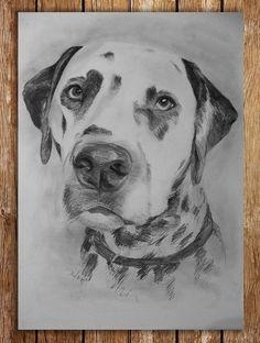 Dalmatiner, Hund, Tier, Zeichnungen, Tiere, Zeichnung