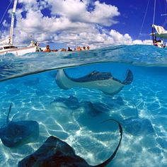 Top 10 Things to do on your Cayman Islands Honeymoon