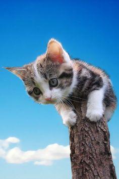 How do I get down ......?