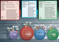 T cells:the ususal subsets