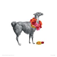 Llama Giclee Print by John Murphy at Art.co.uk