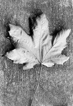 black and white leaf photo Black And White Leaves, White Leaf, Dry Leaf, Monochrome Photography, Abstract, Artwork, Blog, Summary, Work Of Art