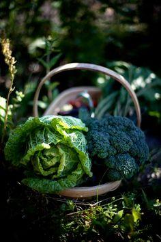 Farm produce #carrymehome #amreading #historicalromance www.dorothyadamek.com