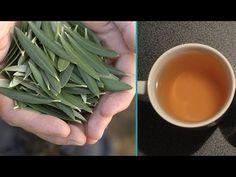 Conoce los beneficios del consumo de este té natural: Green Beans, Healthy Life, Spinach, Health Tips, Life Hacks, Medicine, Food And Drink, Vegetables, Youtube