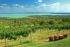 Tihany Peninsula This marvellous peninsula devides the Lake Balaton into two. It is a real pearl of not only the region or the country but also of Europe, a jewel in the middle of the Hungarian sea. Real Pearls, Hungary, The Magicians, Budapest, Roots, Vineyard, Golf Courses, City, Outdoor