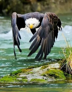 Wow, just wow! ~~~ The Eagle