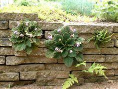 Stapelmuur Plants, Garden, Yard, Secret Garden, Nature