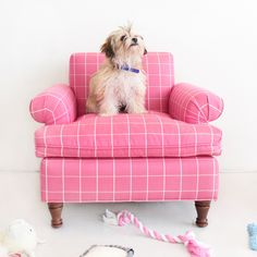 Dog Lounge Chairs from Yar