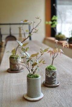 In front is Azalea of in height. Right is Mountain Maple. Back left is Princess Shara. Bonsai Plants, Bonsai Garden, Small Plants, Green Plants, Indoor Flowers, Indoor Plants, Ikebana, Mame Bonsai, Succulent Terrarium