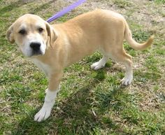 2 / 2    Petango.com – Meet Admiral - 010907i, a 3 months 22 days Great Pyrenees / Mix available for adoption in TUPELO, MS Contact Information Address  2400 S Gloster Street, TUPELO, MS, 38801  Phone  (662) 841-6500  Website  http://www.tupeloleehumane.org  Email  info@tupelo-leehumane.org