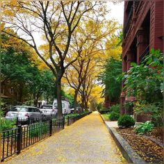 gray clouds are all around but street is filled with these dry yellow trees and wind blowing them all around ... #WindyCity #Uptown #Chicago #SunnyDay #Pretty #Afternoon #Colors #October2016 #Fall2016 #Autumn2016 #Beautiful #Clouds #BlueSkies #Sunshine #HappyThursday