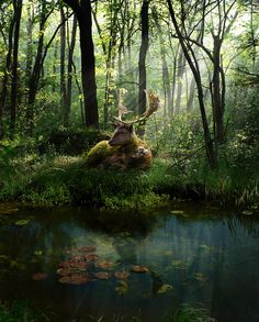 blessed wild apple girl - mererecorder:   Spirit of the Forest by...