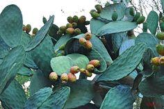 Φωτογραφία - Φωτογραφίες Google Plant Leaves, Photo And Video, Fruit, Google, Plants, Planters, Plant, Planting