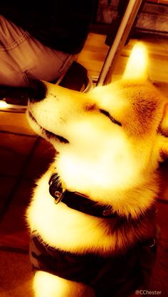 Tokyo Thinking Dog
