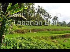 Latest Land For Sale In Tabanan Bali News - http://bali-traveller.com/latest-land-for-sale-in-tabanan-bali-news/