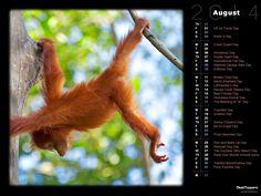 Borneo Orangutan (PD)