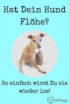 Flöhe | Hunde | Tipps