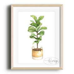 Lola & George - Fiddle Leaf Fig Print Printed on quality silk card. Available in or size. Unframed - any frames and/or additional items shown in product photos not included. Fiddle Leaf Fig, Plant Decor, Planter Pots, A3 Size, Leaves, A5, Frame, Prints, Silk