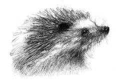 Hedgehog, Artist Sean Briggs producing a sketch a day, prints available at https://www.etsy.com/uk/shop/SketchyLife #art #drawing #hedgehog #http://etsy.me/1rARc0J