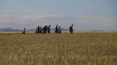 Good luck and hope Spain keeps their women safe from those migrants.  Migrants and refugees walk among fields on their way to Idomeni camp, after trying to cross the Greek-Macedonian border, Saturday, May 14, 2016. Thousands of stranded refugees and migrants are camped at the makeshift refugee camp of the northern Greek border point of Idomeni. (AP Photo/Petros Giannakouris)