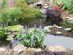 building a pebble beach in a garden pond   | Some examples of ponds that can be built using our kits.
