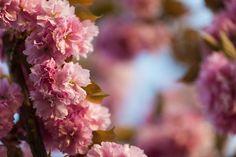 Where Can I Buy CBD Hemp Oil? - flower seeds #nuts #seeds #nutsrecipes #seedsofchange