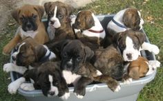 basket of boxers! :-)