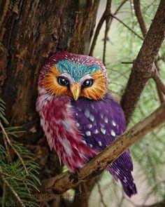 Rare colorful owl. Photo by:©unknown ➖➖➖➖➖➖➖➖➖➖➖➖➖➖➖➖ #Instagram  #beautifulday #natgeo #animals #birds #nationalgeographic #natgeowild #bird #owls #birdlovers #instafollowers #instanature #owl #animallovers #animalplanet #igersoftheday #discovery #instagrammer #followme #nationalgeography #instafollowme #igfollowers #instafamous #instapic #shoutouts #rare #iger #instapicture #followalways #followus