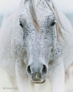Horse with adorable freckled spots.