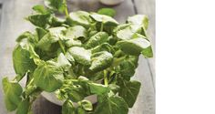 Why we love watercress