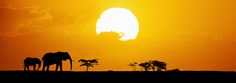 Elephants Silhouetted At Sunset Photograph  - Elephants Silhouetted At Sunset Fine Art Print