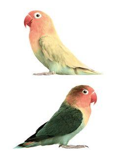KEK Amsterdam Wandtattoo Safari bunte Vögel 23cm bei Fantasyroom