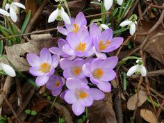 Townmoor Doncaster spring flowers, clean colours as they should be.