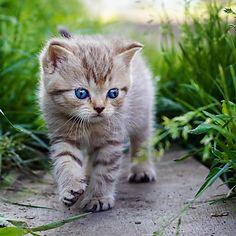 13 außergwöhnliche Katzenbilder - Sie werden sie lieben