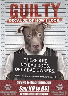 Stop #BSL in Miami Vote Yes to #500 Thank you!