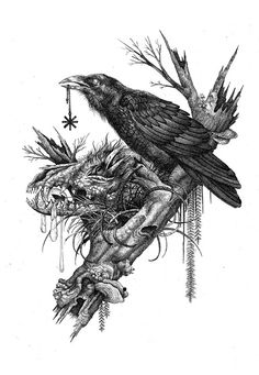 Ravens with Wolf Skull