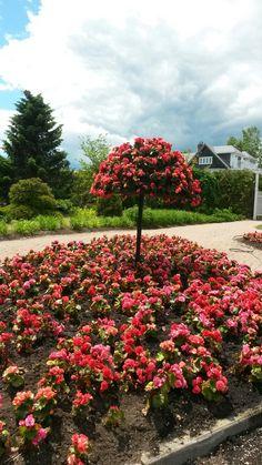 Kingsbrae Garden, St.Andrews  NB