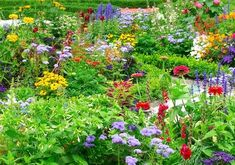 Create a stunning herbaceous flower border filled with perennials and annuals - on a budget! Ideas and inspiration for creating low cost flower borders Herbaceous Border, Herbaceous Perennials, Garden Beds, Lawn And Garden, Garden Plants, Landscape Design, Garden Design, Perennial Garden Plans, Vegetable Garden Planning