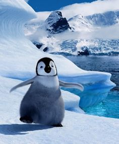 "Happy Feet.  ""Yes, I love the movie, HAPPY FEET...so very cool, and awesomely wonderful.  This should be required viewing for all students in all schools--including college"", says theyoushow@outlook.com"
