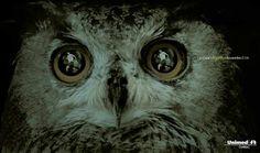 Unimed health centre: Owl