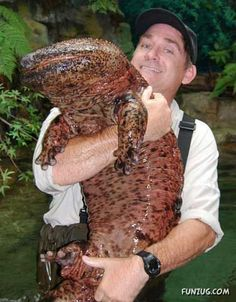 WOW!! This Japanese giant salamander (Andrias japonicus) would be a cool pet... or maybe not...