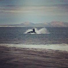 thomas river...esperance australia.... whales!!