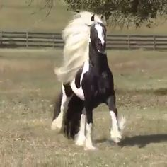awesome - fur, feather &co - Animals Funny Horses, Cute Horses, Horse Love, Funny Horse Videos, Most Beautiful Horses, All The Pretty Horses, Animals Beautiful, Stunningly Beautiful, Cute Baby Animals