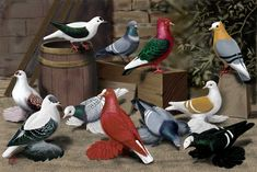 Pigeon art: Various Color Pigeons by Gary Romig