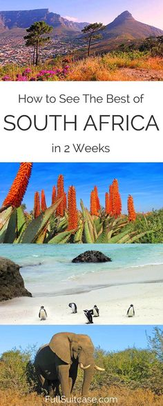 Complete South Africa Trip Itinerary in 2 Weeks See the best of South Africa with this complete 2 week itinerary from Johannesburg to Cape Town Oman Travel, Africa Travel, Traveling To Africa, Travel Tourism, Visit South Africa, Cape Town South Africa, Durban South Africa, South Africa Honeymoon, South Africa Safari