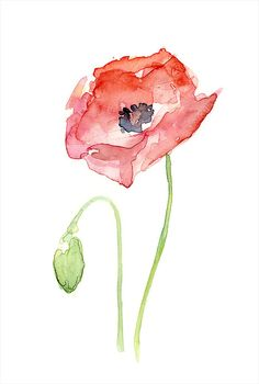 Red Poppy Flower Art Print of Watercolor Painting, Plants, Nature, Poppies