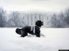 The White House Christmas Card 2012 by  Larissa Kabel, Des Moines, IA features Bo! #White_House #Christmas_Card #Bo